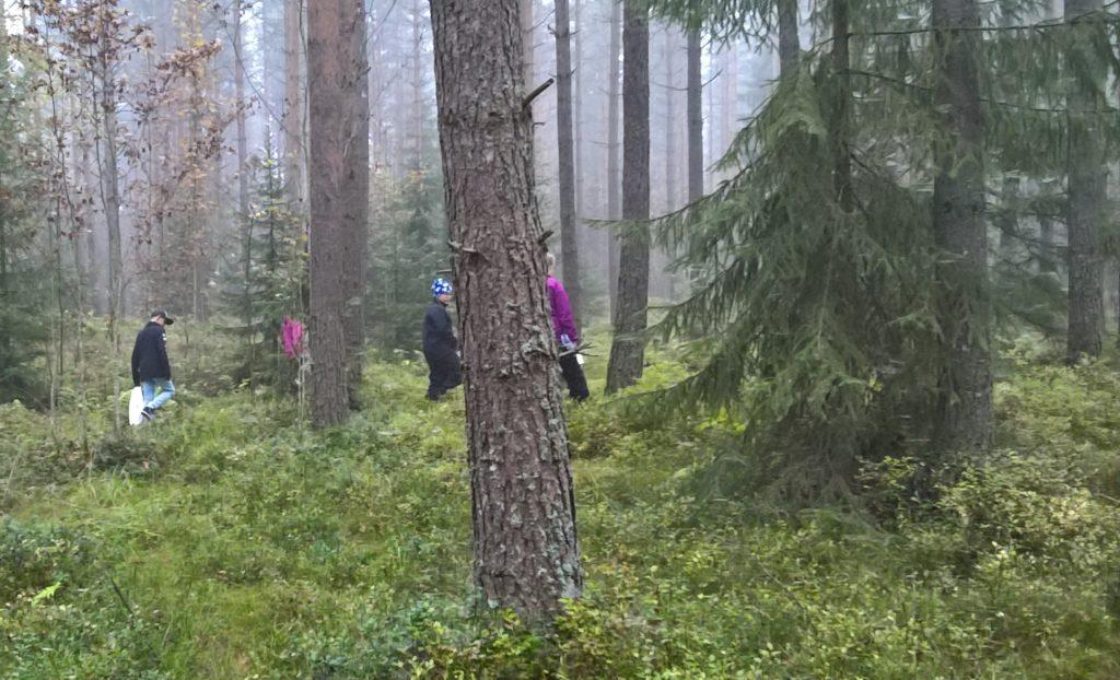 Kuvassa oppilaat ovat sienestämässä metsässä.